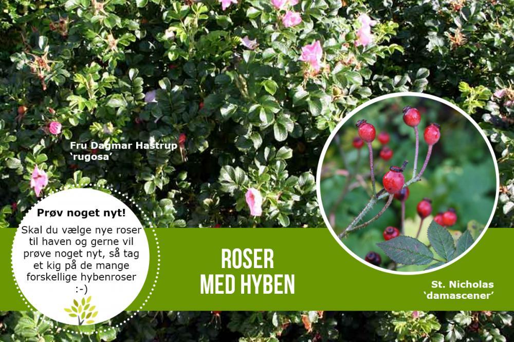 lundhede roser